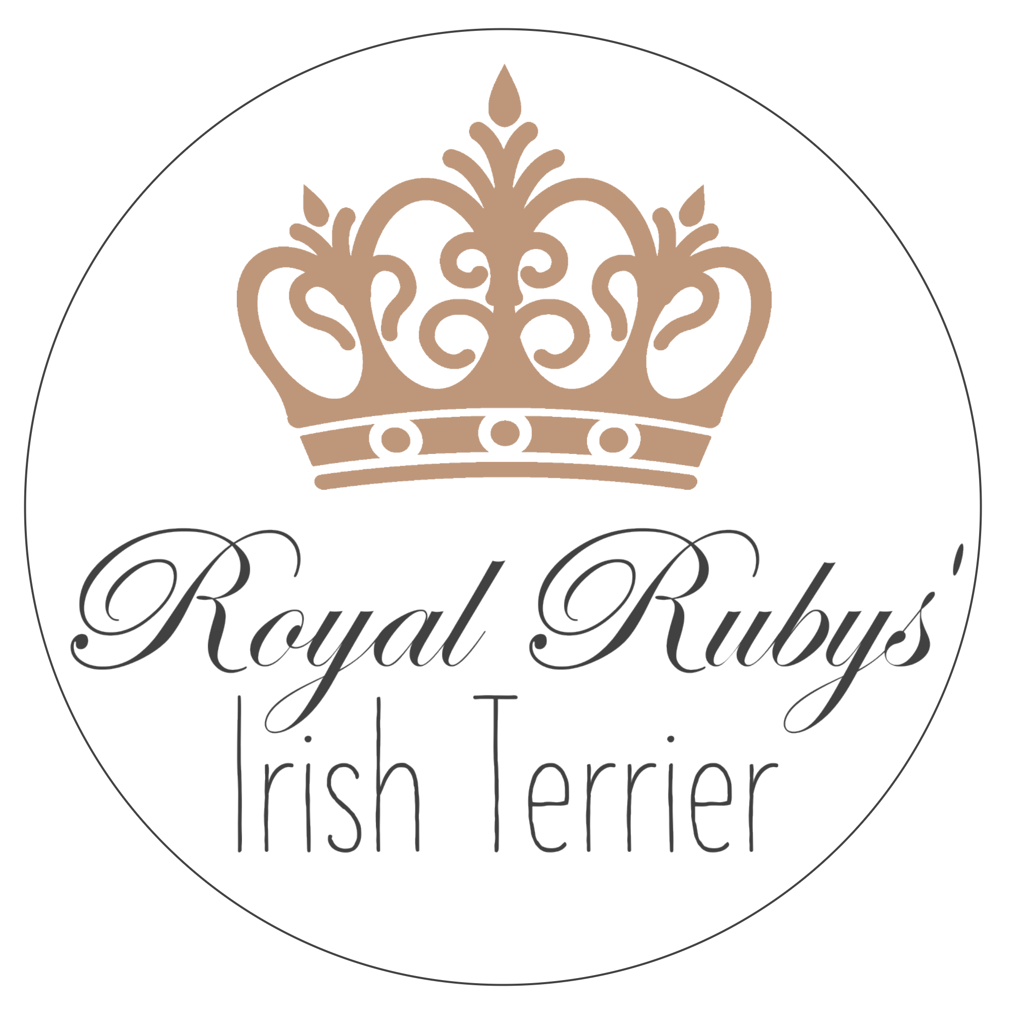 Royal Rubys' Irish Terrier